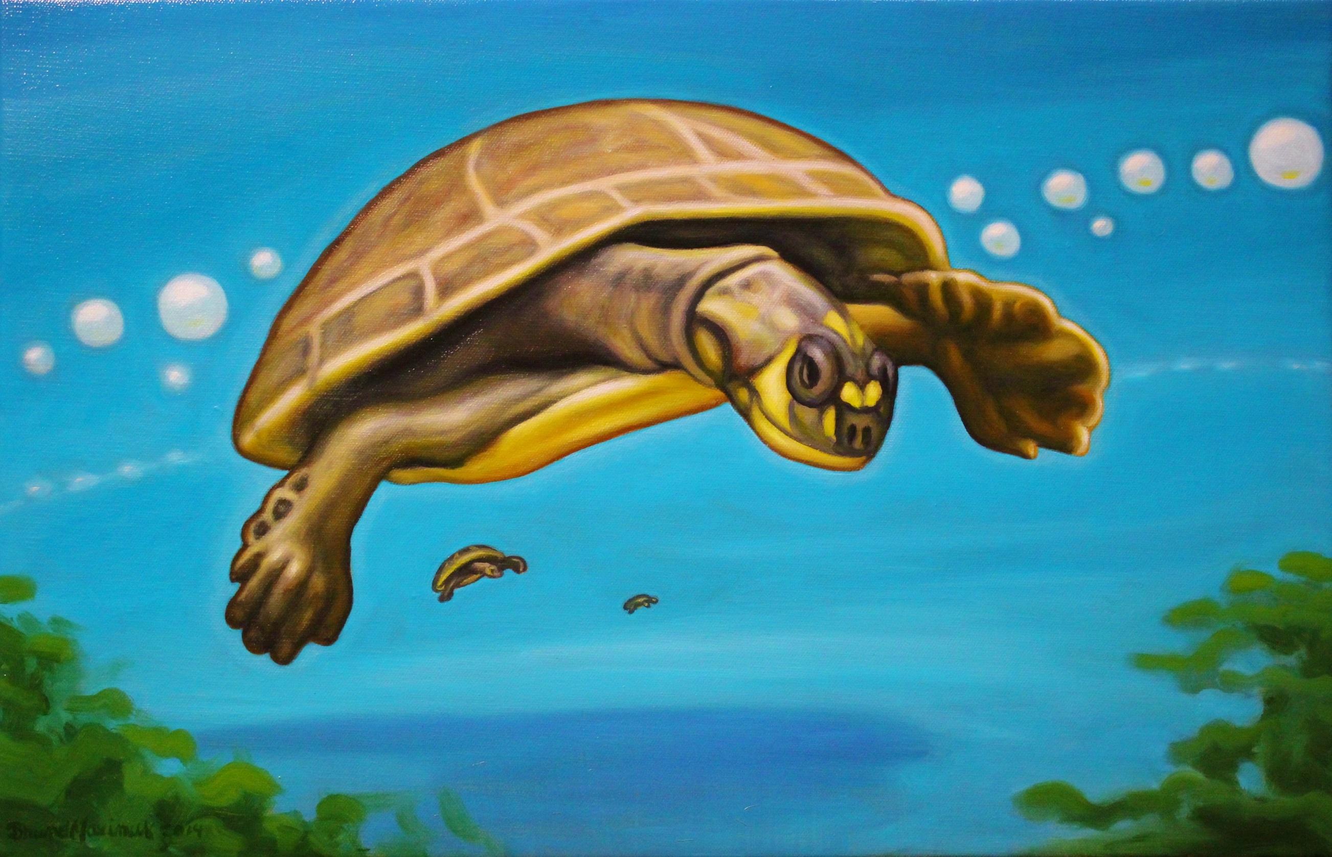 Turtles, 2014